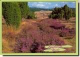 A postcard from Soltau (Myriam)