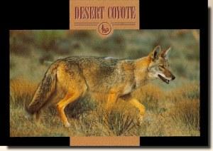 A postcard from Glendale, AZ (Carol Williams 3/4)
